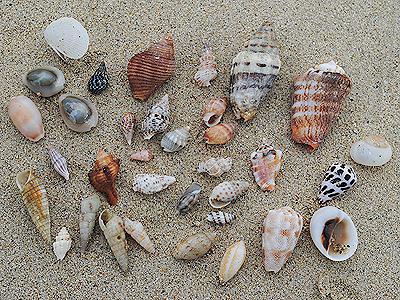 みつけた貝殻
