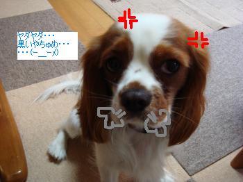 DSC00122_convert_20101012021309.jpg