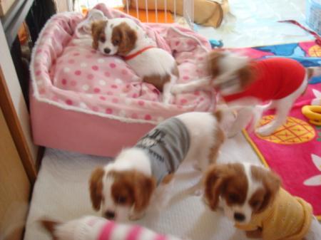 DSC03616_convert_20110113002207.jpg