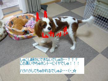 P1000311_convert_20101012021112.jpg