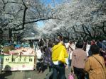 上野の桜その1