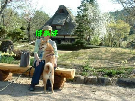 2003shokawa2.jpg
