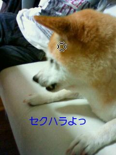 20100816.jpg