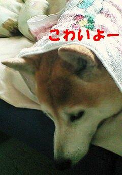 NEC_0064_20100415204230.jpg