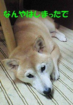 NEC_0069_20100413201156.jpg