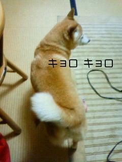 NEC_0084_20110306102356.jpg