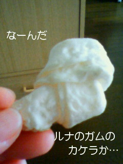 NEC_0086_20110214144255.jpg