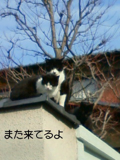 NEC_0094_20110221212432.jpg
