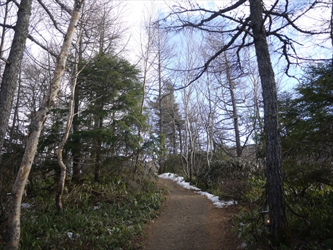 森を歩いて