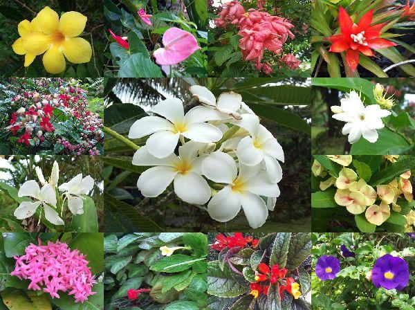 その他の花集合