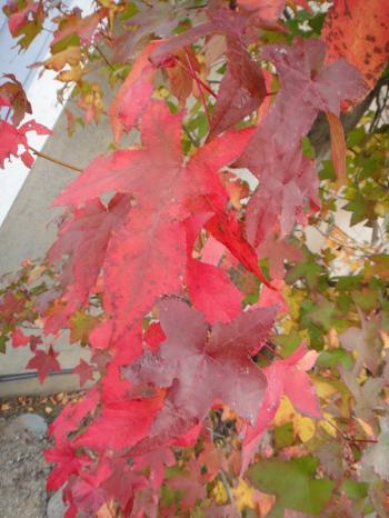 絵になる秋