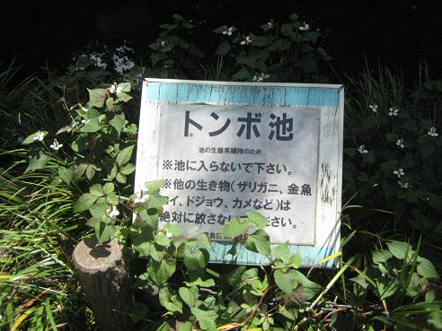 コピー ~ かっぱ探検隊 003