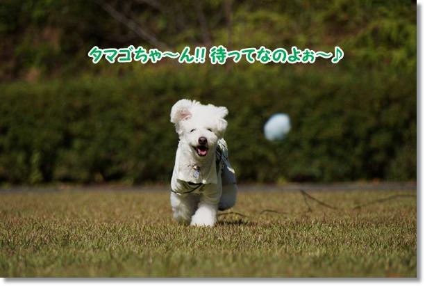 タマゴちゃ~ん!!4