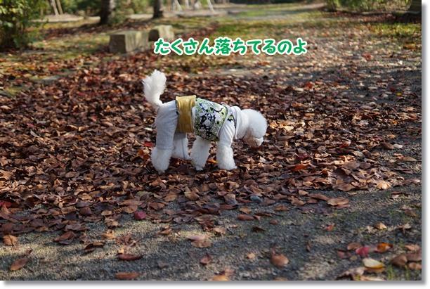 落ち葉の季節3