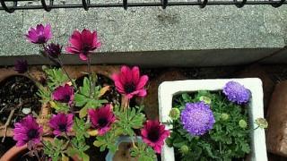 おにわの花たち