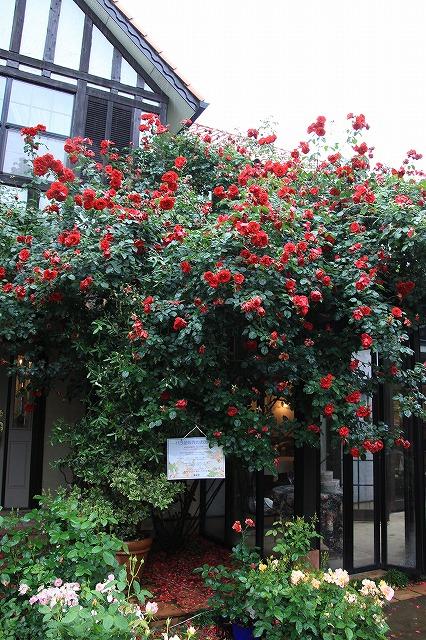 IMG_0917薔薇館