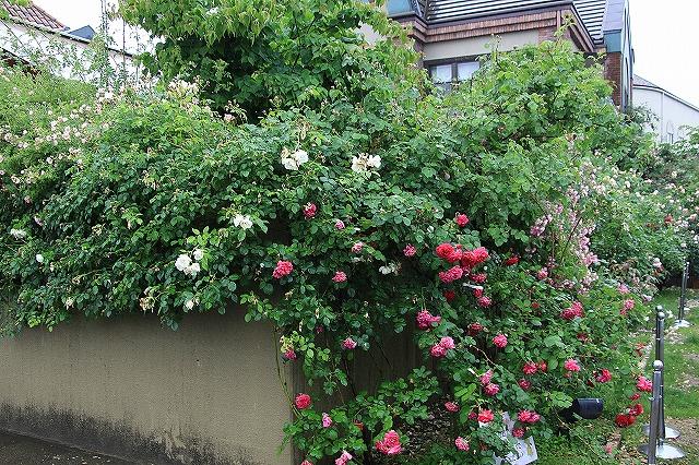 IMG_0942薔薇館