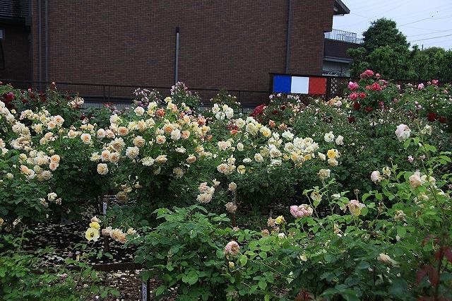 IMG_0943薔薇館