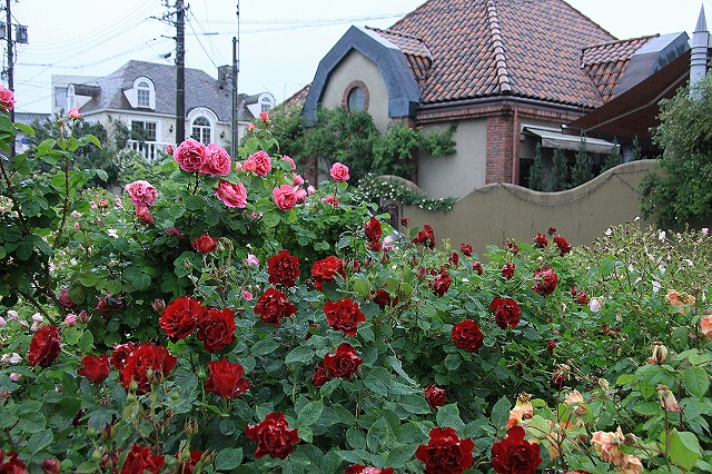 IMG_0964薔薇館