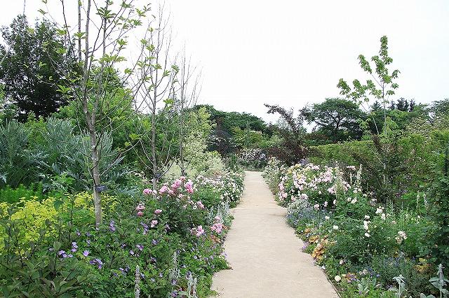 IMG_1363野鳥の森ガーデン