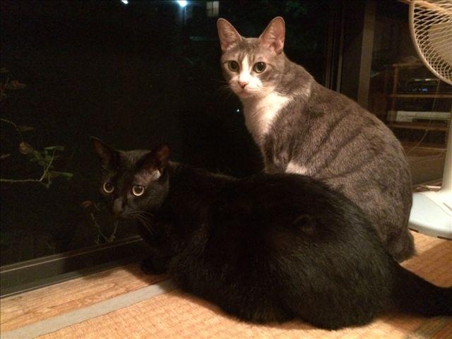 ビビちゃん & ルフィー