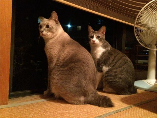 チョッパー & ルフィー