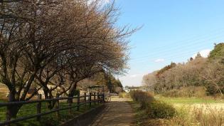 2012.03矢指・追分市民の森(桃の花)7