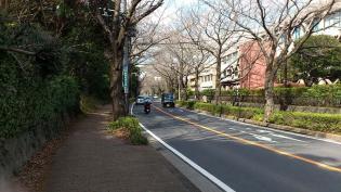 2012.03.25矢指・追分市民の森(菜の花)+(桃の花) 1