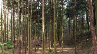 2012.03.25矢指・追分市民の森(菜の花)+(桃の花) 3