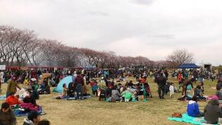 米海軍上瀬谷支援施設 日米親善桜まつり2012 17