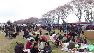 米海軍上瀬谷支援施設 日米親善桜まつり2012 20