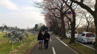 米海軍上瀬谷支援施設 日米親善桜まつり2012 24