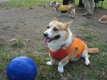ぽち ボール