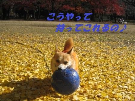 2011_1210_114622-IMG_7702.jpg