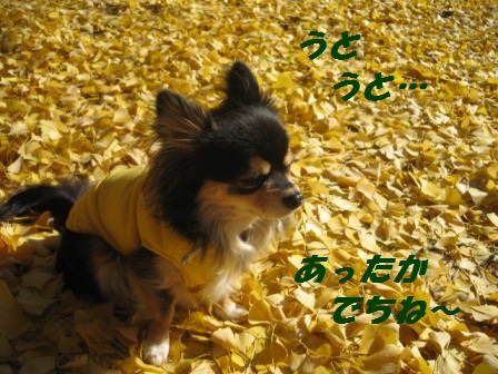 2011_1210_115053-IMG_7703.jpg
