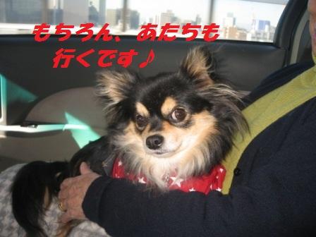 2011_1217_105650-IMG_7734.jpg