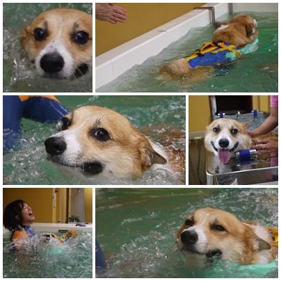 プールでスイっと