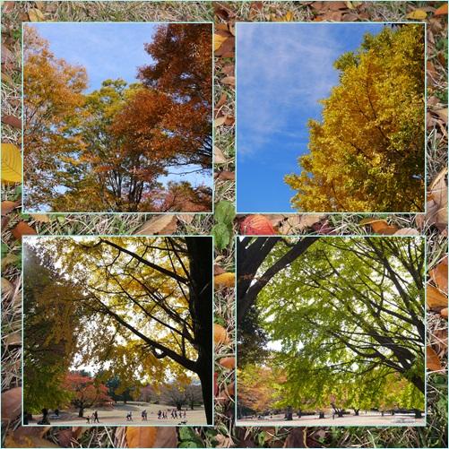 芝生広場紅葉
