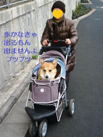 2012_0213_081547-IMG_8138.jpg