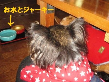 2012_0318_123225-IMG_8350.jpg