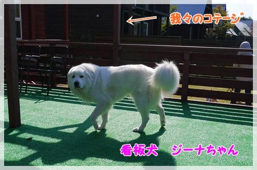 2012_1021_100922-P1020114.jpg