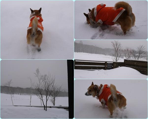 朝一 新雪