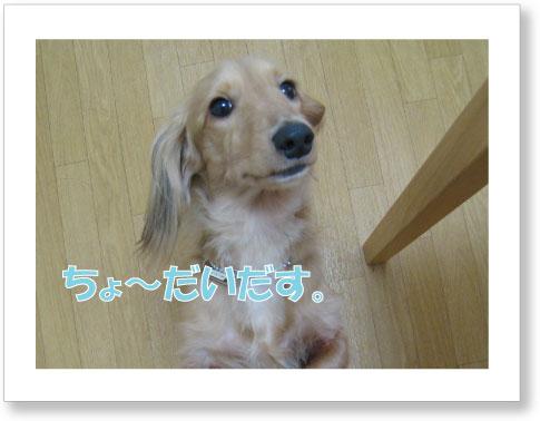 dankichi-110.jpg