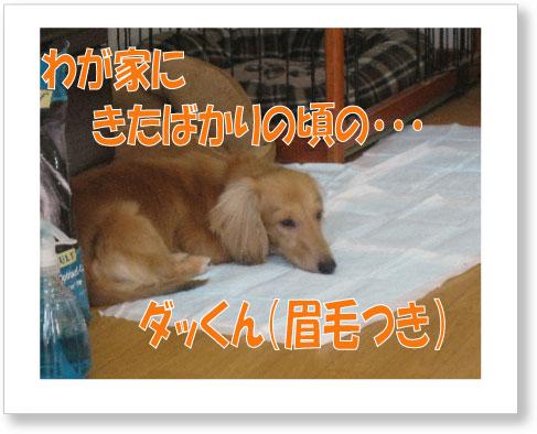dankichi-134.jpg