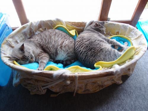 我が家の猫ども①
