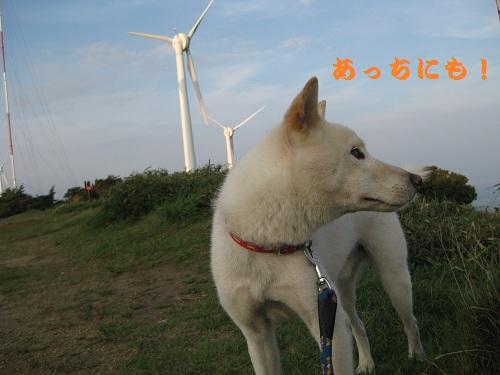 20110813-6.jpg