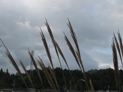 20111107-4.jpg