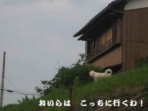 20120813-7.jpg