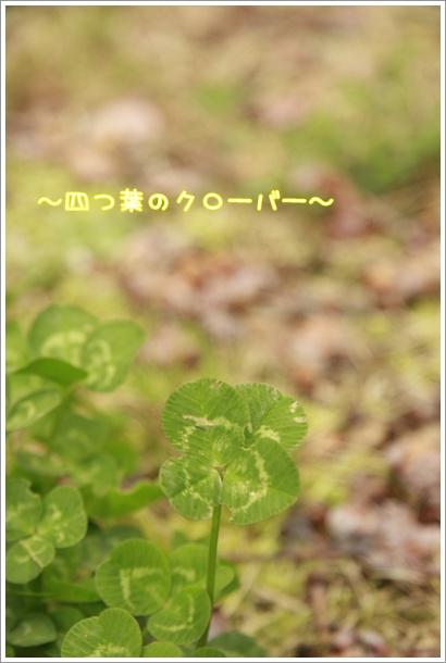 028_20100321235644.jpg