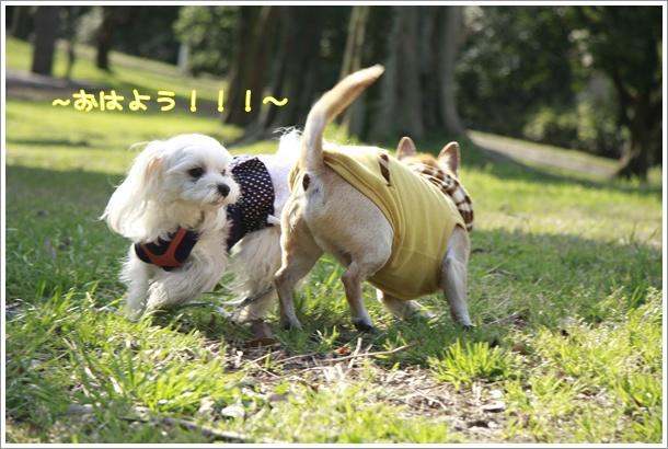 041_20100323231835.jpg